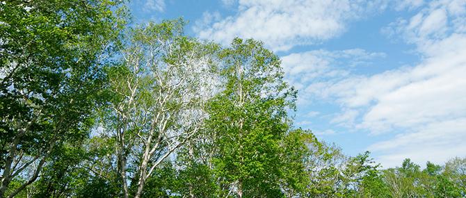樹林の画像